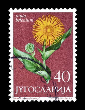 philately: Cancelled postage stamp printed by Yugoslavia, that shows Marchalan flower, circa 1965.