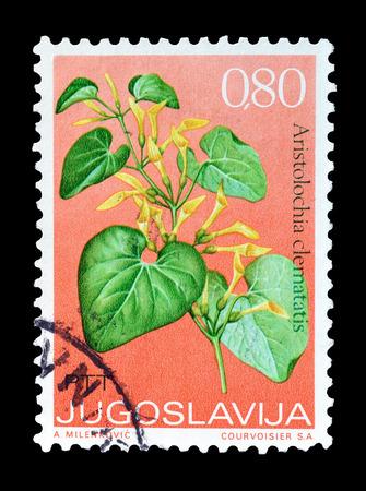 yugoslavia: Cancelled postage stamp printed by Yugoslavia, that shows Birthwort flower, circa 1973.