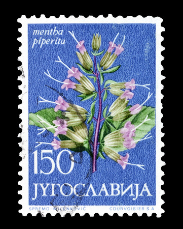 yugoslavia: Cancelled postage stamp printed by Yugoslavia, that shows Mint flower, circa 1965.