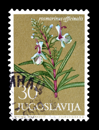 post stamp: Cancelled postage stamp printed by Yugoslavia, that shows Rosemary flower, circa 1965.