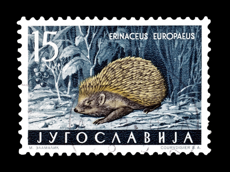 philately: Cancelled postage stamp printed by Yugoslavia, that shows European hedgehog, circa 1960.