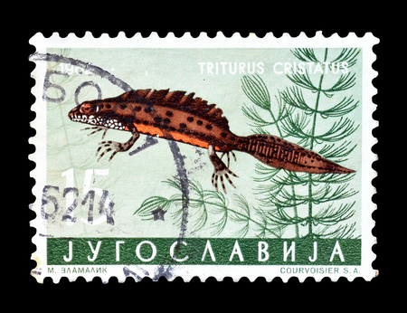 philately: Cancelled postage stamp printed by Yugoslavia, that shows  Great Crested Newt, circa 1962.