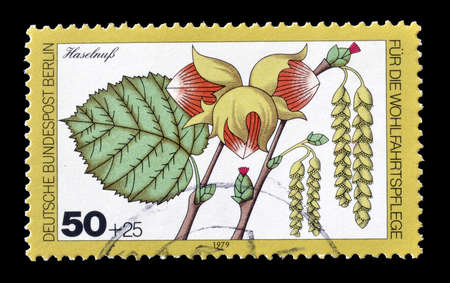 corylus: Cancelled postage stamp printed by Berlin, that shows Corylus avellana, circa 1979.