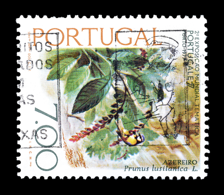 portugese: Cancelled postage stamp printed by Portugal, that shows Portugese laurel cherry, circa 1976.