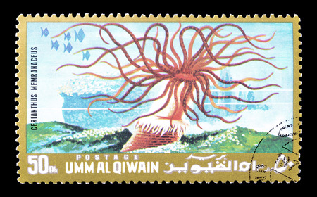 umm: Cancelled postage stamp printed by Umm al-Qaiwain, that shows colored tube anemone, circa 1972.