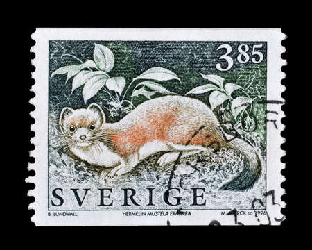stoat: Cancelled postage stamp printed by Sweden, that shows Stoat, circa 1996.