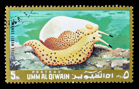 umm: Cancelled postage stamp printed by Umm al-Qaiwain, that shows little warty cowrie, circa 1972. Editorial