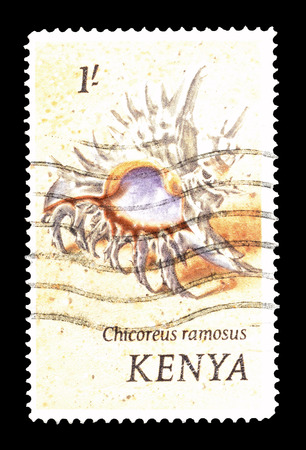murex shell: Cancelled postage stamp printed by Kenya, that shows Ramose murex, circa 1971.