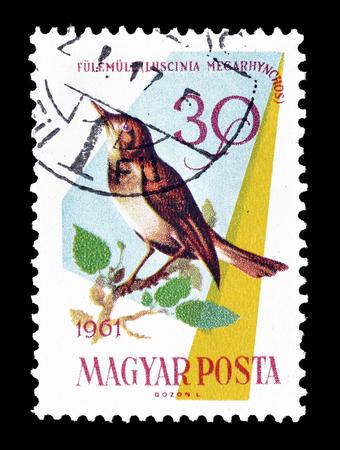 ruiseñor: Cancelado sello impreso por Hungría, que muestra Nightingale Común, alrededor de 1961.