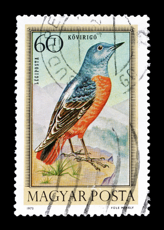 thrush: Cancelled postage stamp printed by Hungary, that shows Common Rock Thrush, circa 1973. Editorial