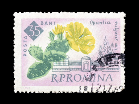 philately: Cancelled postage stamp printed by Romania, that shows Prickly pears, circa 1961.