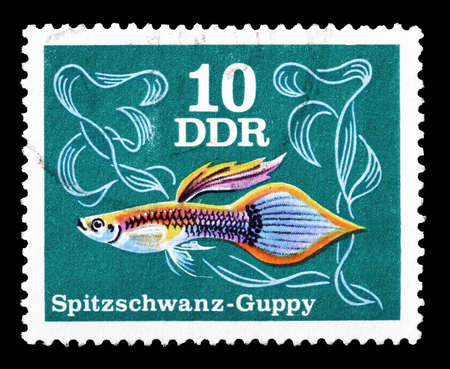 guppy: Cancelled postage stamp printed by German Democratic Republic, that shows Pointed tail Guppy, circa 1976.