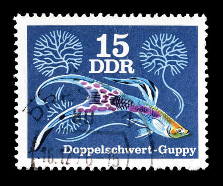 guppy: Cancelled postage stamp printed by German Democratic Republic, that shows Double Sword Guppy, circa 1976.