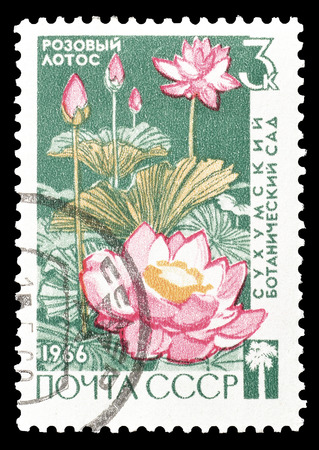 philately: Cancelled postage stamp printed by Soviet Union, that shows Lotus, circa 1966.