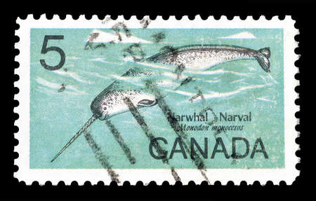 philately: Cancelled postage stamp printed by Canada, that shows  Narwhal, circa 1968.