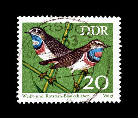 philately: Cancelled postage stamp printed by German Democratic Republic, that shows White spotted and red spotted blue throats, circa 1973.