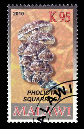 shaggy: Cancelled postage stamp printed by Malawi, that shows Shaggy scalycap, circa 2010.