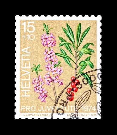dwarves: Cancelled postage stamp printed by Switzerland, that shows Dwarf laurel, circa 1974.