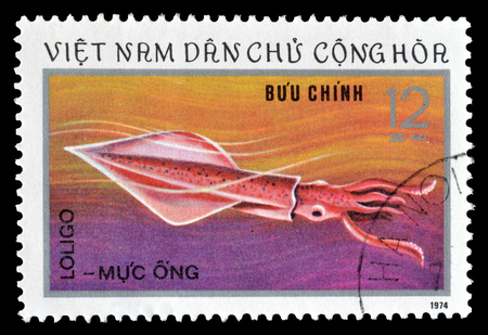 timbre postal: Cancelled postage stamp printed by Vietnam, that shows Loligo, circa 1974.