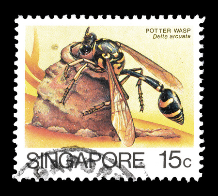 alfarero: Cancelado sello impreso por Singapur, que muestra Potter avispa, alrededor de 1985.