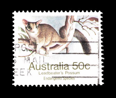 opossum: Cancelled postage stamp printed by Australia, that shows Leadbeaters opossum, circa 1981. Editorial