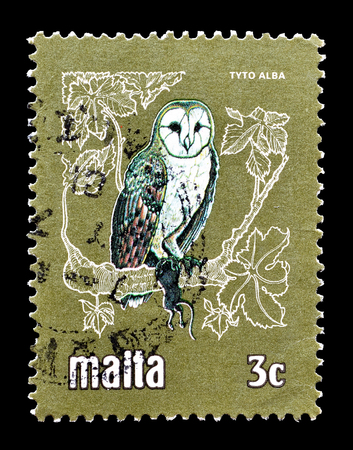 Cancelled postage stamp printed by Malta, that shows Barn owl, circa 1981. Editorial