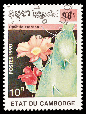 opuntia: Cancelled postage stamp printed by Cambodia, that shows Opuntia Retrosa cactus, circa 1990.