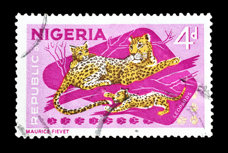 postage: Cancelled postage stamp printed by Nigeria, that shows Leopard and cubs, circa 1965. Editorial
