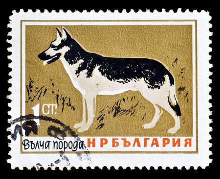 postage: Cancelled postage stamp printed by Bulgaria, that shows German Shepherd, circa 1964. Editorial