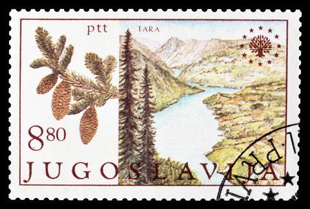yugoslavia: Cancelled postage stamp printed by Yugoslavia, that shows National park Tara, circa 1982.