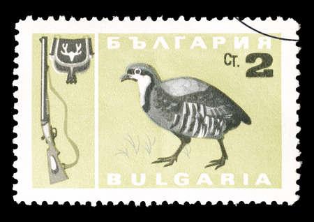 kuropatwa: Cancelled postage stamp printed by Bulgaria, that shows Chukar partridge, circa 1967. Publikacyjne