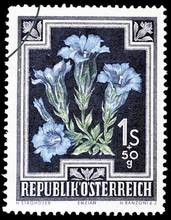 philately: Cancelled postage stamp printed by Austria, that shows Trumpet gentian, circa 1948.