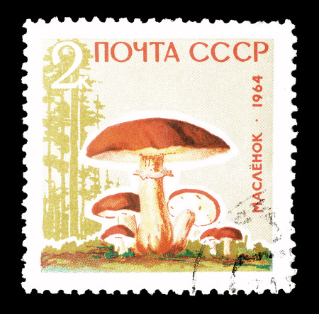 Cancelled postage stamp printed by Soviet Union, that shows Butter mushroom, circa 1964.