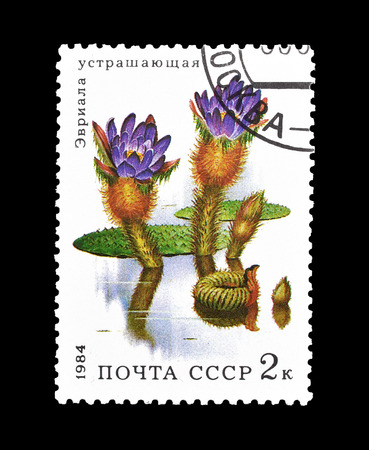 ソ連が印刷した切手の取り消しは、1984年頃のプリックリー・ウォーター・リリーを示しています。