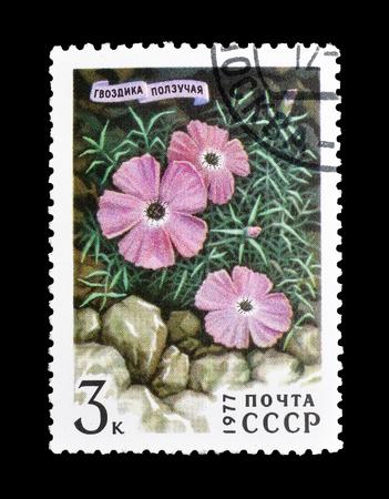 1977年頃のディアンサス・レペンスを示すソビエト連邦によって印刷された切手をキャンセルしました。 報道画像