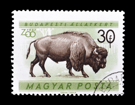 Cancelled postage stamp printed by Hungary, that shows Bison, circa 1961. Sajtókép