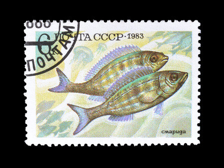 Cancelled postage stamp printed by Soviet Union, that shows Pickerel fish, circa 1983. Editorial