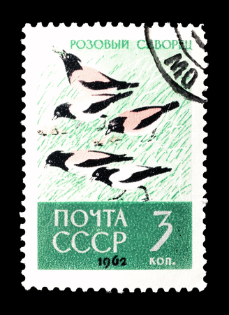 Cancelled postage stamp printed by Soviet Union, that shows Rosy Starling, circa 1962.