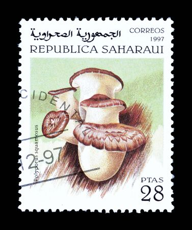 Cancelled postage stamp printed by Sahrawi Republic, that shows mushroom.