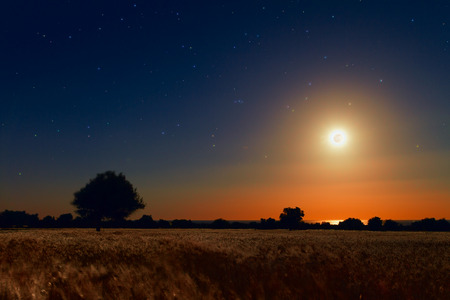 not full: The full Moon enlightens this spring night. The blue hour has not passed and even the moon is just above the horizon painting the field with an orange cast. Stock Photo