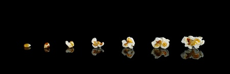 kernels: The different stages from the maize kernel to the popcorn photographed on black with reflection