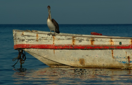 Bird on old fishing boat looking for fish  photo