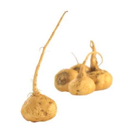 widely: Peruvian Ginseng (Sp. Maca, lat. Lepidium meyenii) which is widely used in Peru for its various health effects and high nutritional value (Isolated) (Selective Focus, Focus on the root in the front) Stock Photo