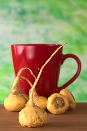 maca: Peruvian Ginseng (Sp. Maca, lat. Lepidium meyenii) which is widely used in Peru for its various health effects and high nutritional value with a red tea cup in the back on wood (Selective Focus, Focus on the front root)