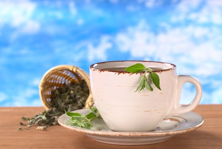 Herbal tea prepared from the Peruvian herb called Muna (lat. Minthostachys stetosa) which is used mainly for its positive digestive effects and has a mint-like taste (Selective Focus, Focus on the head of the fresh plant on the rim of the cup) Stock Photo - 9462724