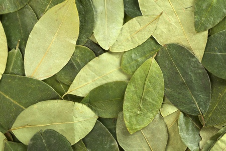 Dried coca (lat. Erythroxylum coca) leaves as background. In Peru coca leaves are drunk as tea and they are traditionally chewed in the mountains to help against altitude sickness Stock Photo - 10201859