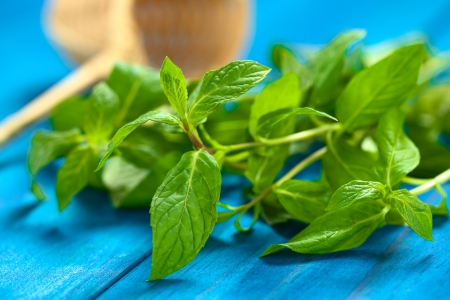 Fresh mint leaves on blue wood with tea strainer in the back Stock Photo - 22109883