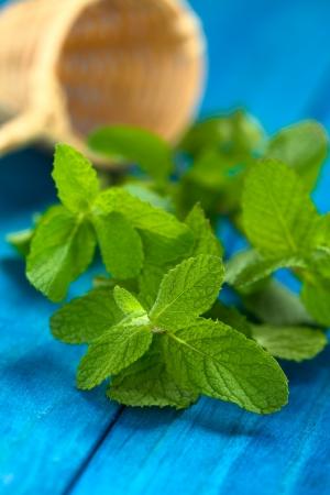 carminative: Minthostachys mollis herb