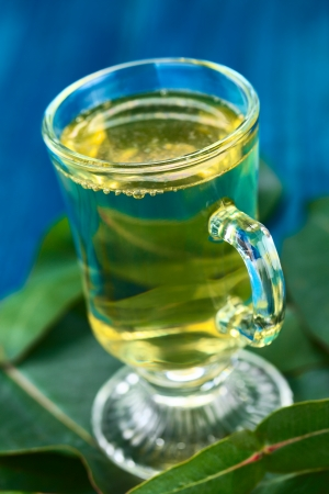 Freshly prepared hot tea made of Eucalyptus leaves in glass (Selective Focus, Focus on the front of the glass rim) Stock Photo - 23177253