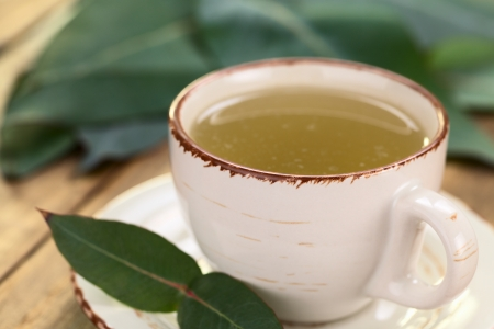 Freshly prepared hot tea made of Eucalyptus leaves in cup (Selective Focus, Focus on the front rim and the handle of the cup) Stock Photo - 23177271